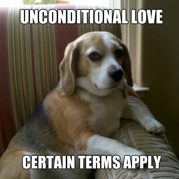 unconditional love certain terms apply - judgmental dog