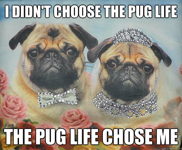 i didnt choose the pug life the pug life chose me - Pug Life