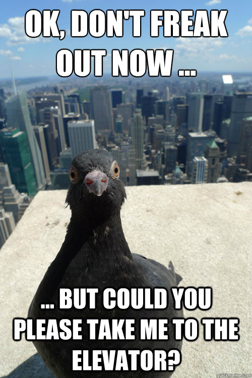 ok dont freak out now but could you please take me - Empire State Pigeon