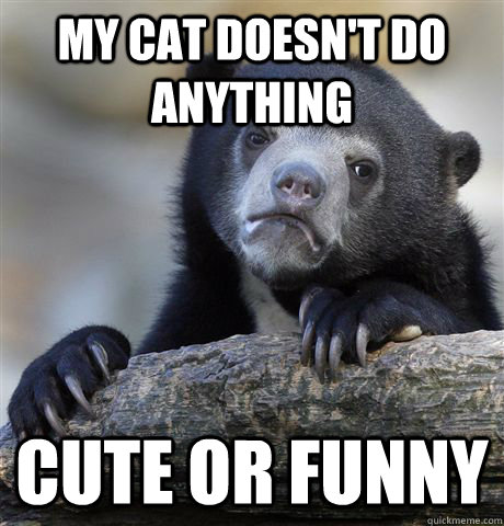 my cat doesnt do anything cute or funny - Confession Bear