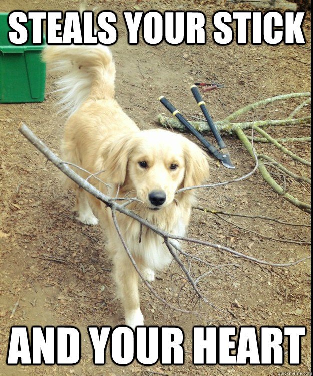 steals your stick and your heart - RPGR