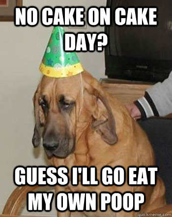 no cake on cake day guess ill go eat my own poop - Sad Birthday Dog