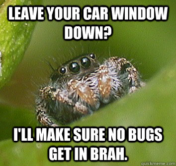leave your car window down ill make sure no bugs get in br - Misunderstood Spider