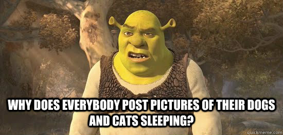 why does everybody post pictures of their dogs and cats slee - Confused Shrek