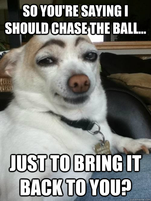 so youre saying i should chase the ball just to bring it - Skeptical Dog