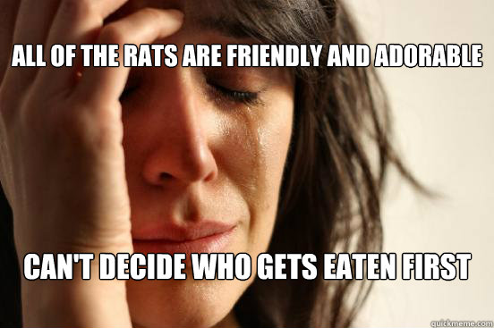 all of the rats are friendly and adorable cant decide who  - First World Problems
