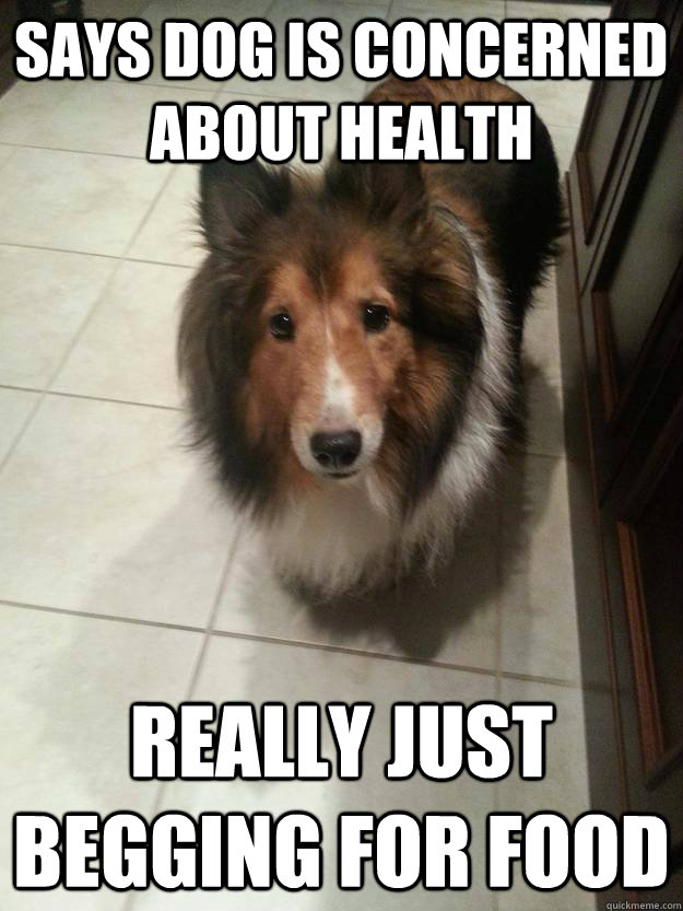 says dog is concerned about health really just begging for f -