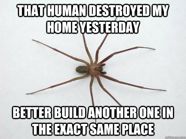 that human destroyed my home yesterday better build another  - 