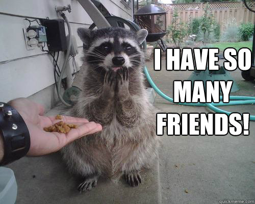 i have so many friends  - grateful raccoon