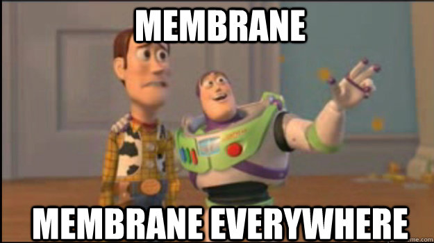 membrane membrane everywhere - Buzz