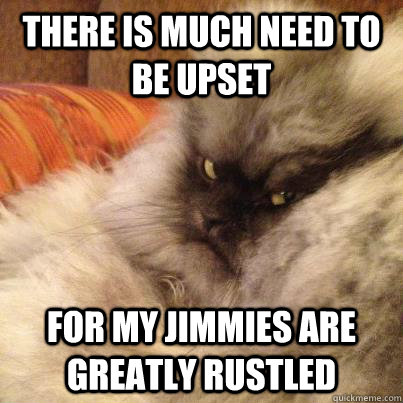 there is much need to be upset for my jimmies are greatly ru - Angriest Cat
