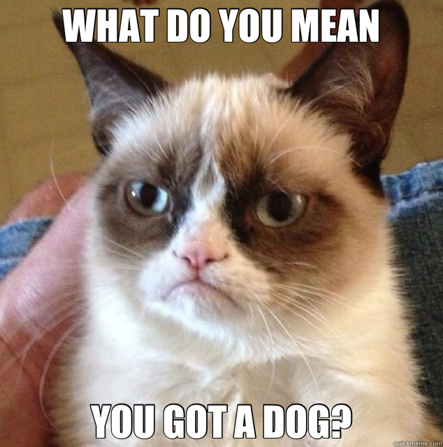 WHAT DO YOU MEAN YOU GOT A DOG? - Grumpy Cat