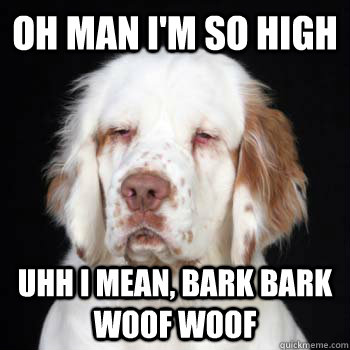 oh man im so high uhh i mean bark bark woof woof - stoner dog