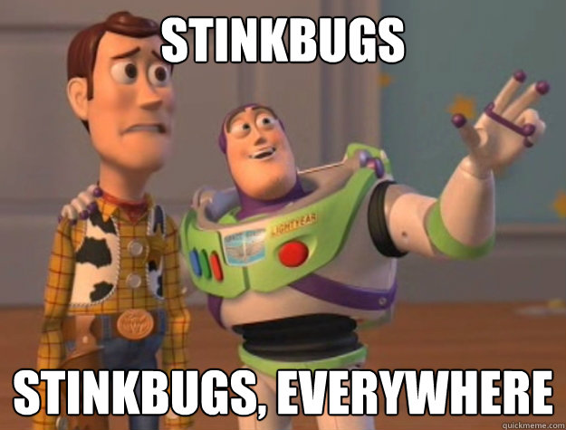 stinkbugs stinkbugs everywhere - Ducks. Ducks Everywhere