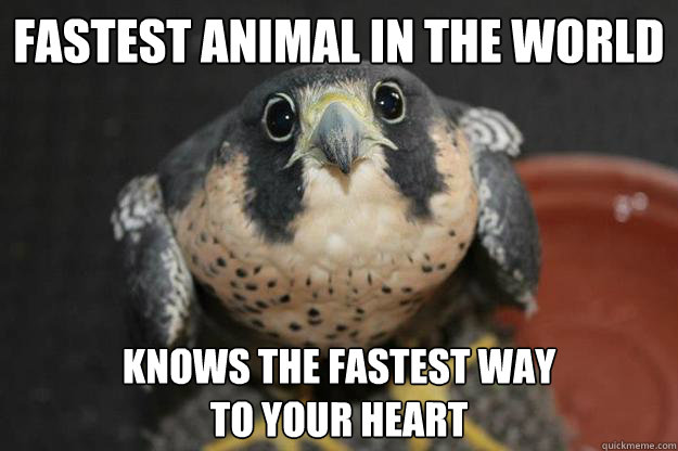 fastest animal in the world knows the fastest way to your h - Puppydog Peregrine Falcon