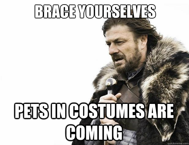 brace yourselves pets in costumes are coming - Brace Yourself