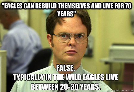 eagles can rebuild themselves and live for 70 years false - Schrute