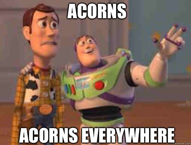 Acorns Acorns everywhere - everywhere