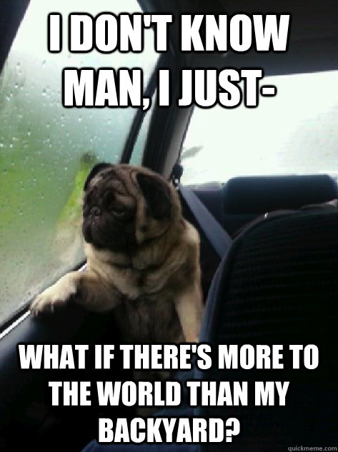 i dont know man i just what if theres more to the world  - Introspective Pug