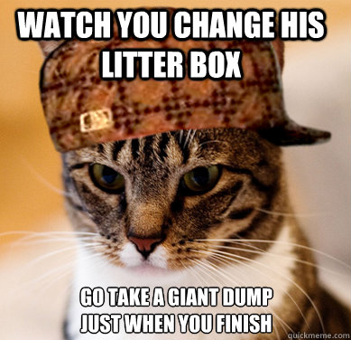 watch you change his litter box go take a giant dump just wh - Scumbag Cat