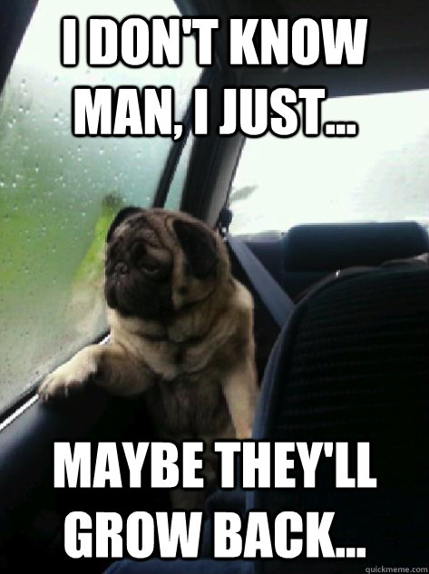 i dont know man i just maybe theyll grow back - Introspective Pug