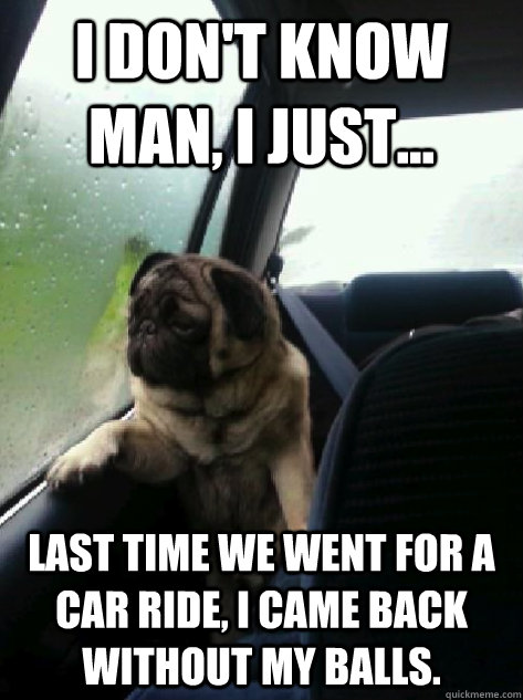 i dont know man i just last time we went for a car ride - Introspective Pug