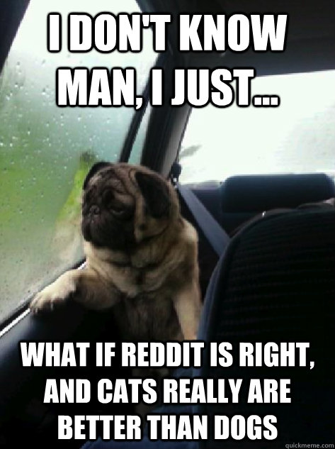 i dont know man i just what if reddit is right and cat - Introspective Pug