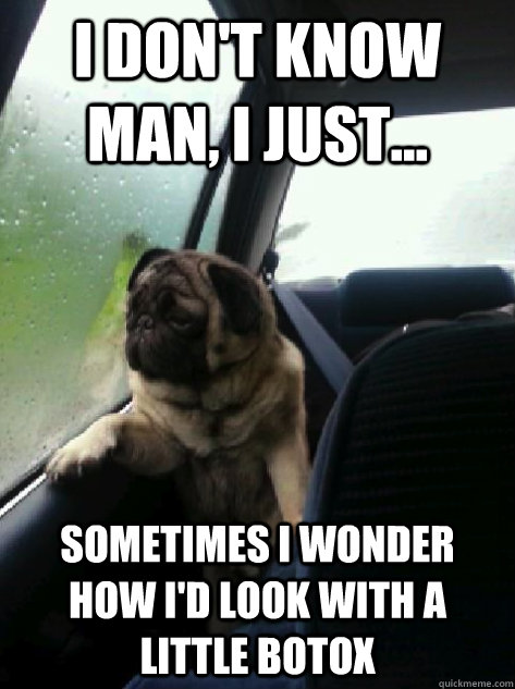 i dont know man i just sometimes i wonder how id look  - Introspective Pug