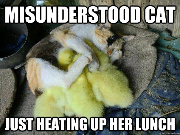 misunderstood cat just heating up her lunch -