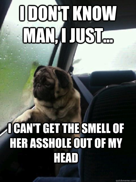 i dont know man i just i cant get the smell of her ass - Introspective Pug