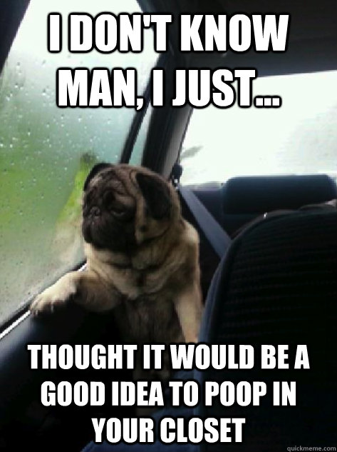 i dont know man i just thought it would be a good idea  - Introspective Pug