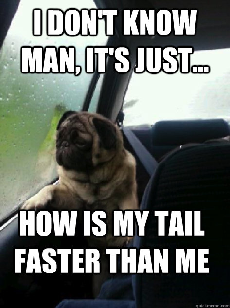 i dont know man its just how is my tail faster than me - Introspective Pug