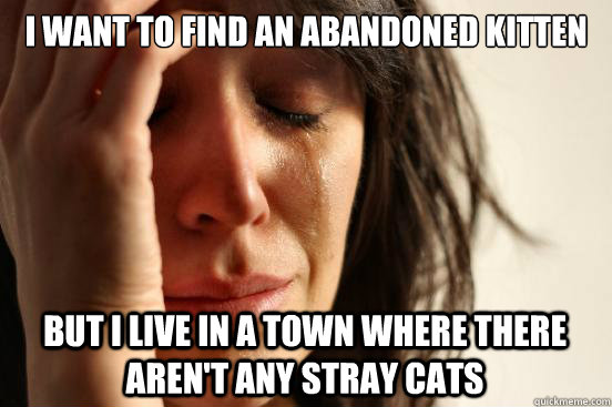 i want to find an abandoned kitten but i live in a town whe - First World Problems