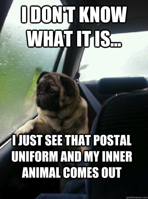 i dont know what it is i just see that postal uniform an - Introspective Pug