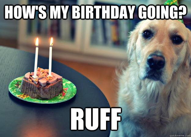 hows my birthday going ruff - Sad Birthday Dog