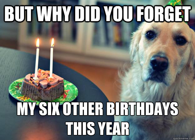 but why did you forget my six other birthdays this year - Sad Birthday Dog