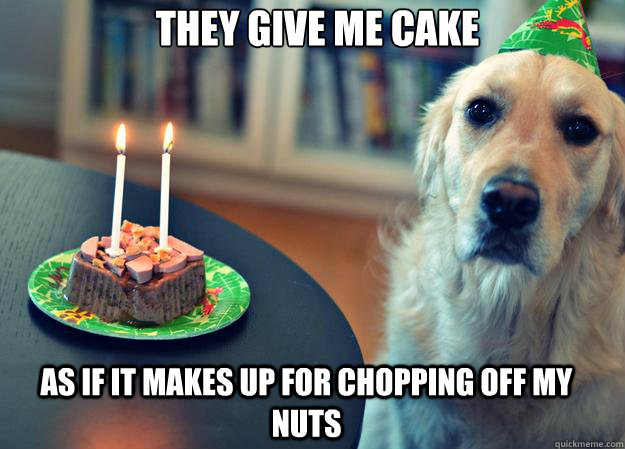 they give me cake as if it makes up for chopping off my nuts - Sad Birthday Dog
