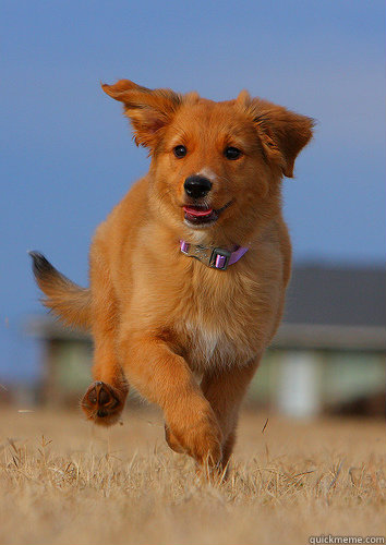 doesnt run through field field moves around him - Ridiculously Photogenic Puppy