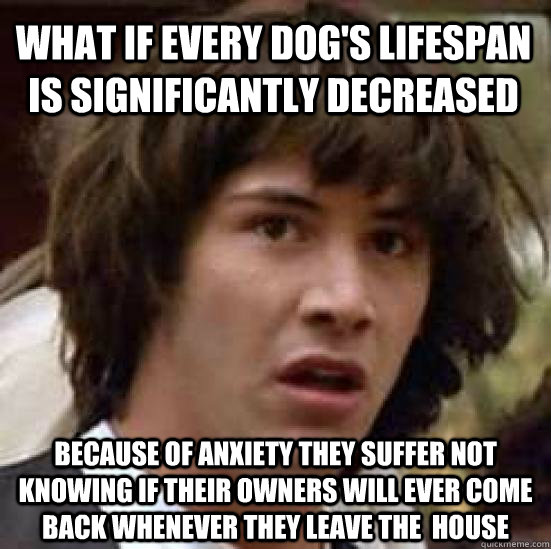 what if every dogs lifespan is significantly decreased beca - conspiracy keanu