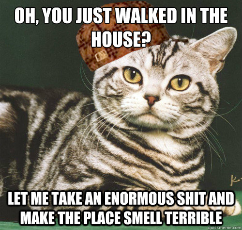 oh you just walked in the house let me take an enormous sh - Scumbag cat