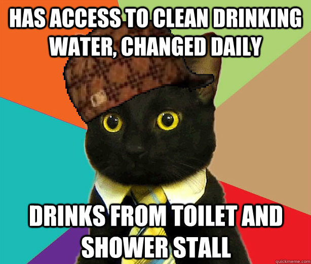 has access to clean drinking water changed daily drinks fro - Scumbag Cat
