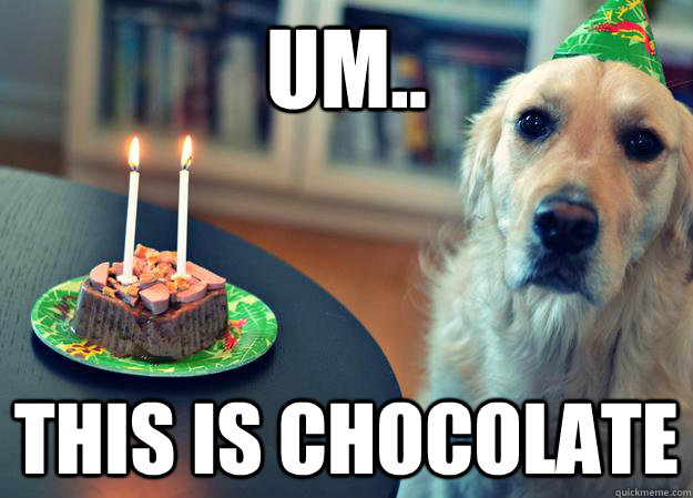 um this is chocolate - Sad Birthday Dog