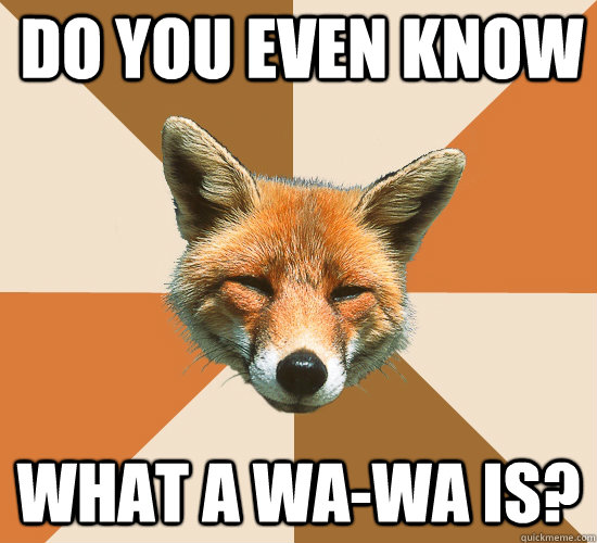 do you even know what a wawa is - Condescending Fox