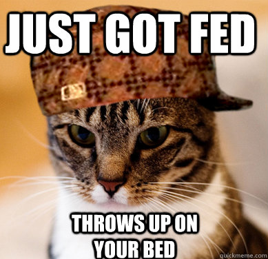just got fed throws up on your bed - Scumbag Cat