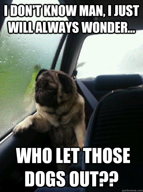 i dont know man i just will always wonder who let thos - Introspective Pug