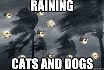 cat in the rain versus indian Cats came to symbolize down-pouring rain, and dogs to symbolize strong gusts  of wind this may be where the phrase it's raining cats and  the hindu  believed the cat was the symbol for childbirth.