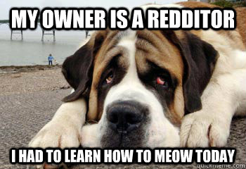 my owner is a redditor i had to learn how to meow today - Sad dog