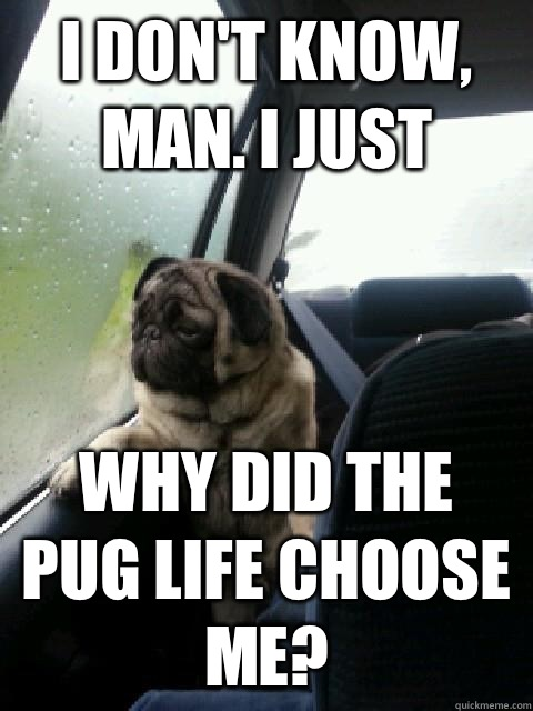 i dont know man i just why did the pug life choose me - Introspective Pug