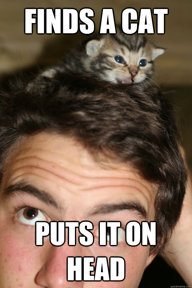finds a cat puts it on head -