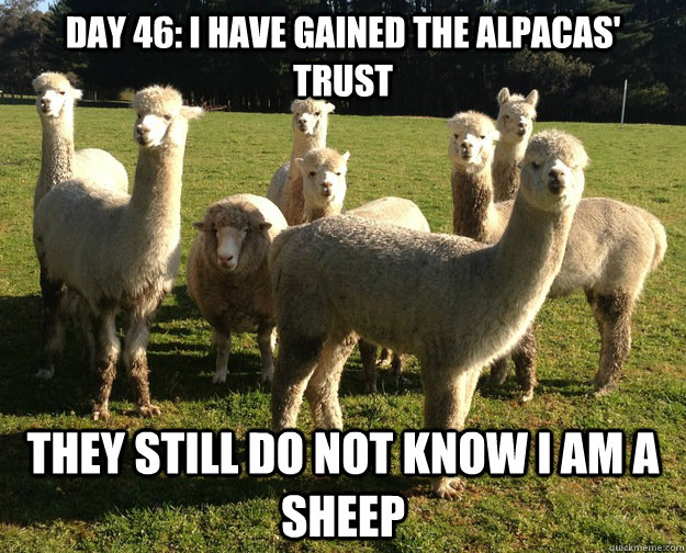 day 46 i have gained the alpacas trust they still do not k -